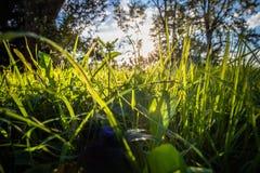 Chiuda su di bei prato ed alberi verdi con illuminazione della parte posteriore del sole Fotografia Stock