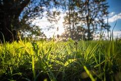 Chiuda su di bei prato ed alberi verdi con illuminazione della parte posteriore del sole Fotografie Stock