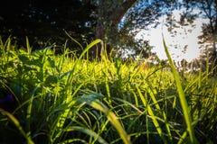 Chiuda su di bei prato ed alberi verdi con illuminazione della parte posteriore del sole Immagine Stock Libera da Diritti