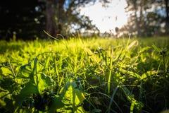 Chiuda su di bei prato ed alberi verdi con illuminazione della parte posteriore del sole Immagine Stock