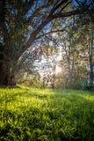 Chiuda su di bei prato ed alberi verdi con illuminazione della parte posteriore del sole Immagini Stock Libere da Diritti