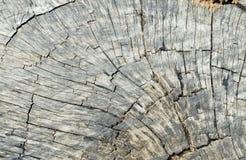 Chiuda su di bello ceppo di albero Fotografia Stock