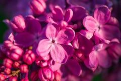 Chiuda su di brunch con i fiori lilla Fotografie Stock