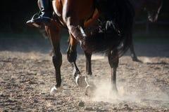 Chiuda su di correre delle gambe del cavallo Immagini Stock