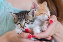 Chiuda su di due gattini svegli in mani del ` s della donna fotografie stock libere da diritti