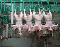 Chiuda su di elaborazione di pollame Fotografia Stock
