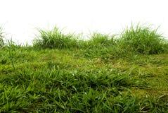 Chiuda in su di erba fresca fotografia stock