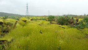 Chiuda su di erba spessa fresca con le gocce di acqua nel primo mattino Erba verde fresca con il primo piano delle gocce di acqua Immagine Stock