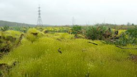 Chiuda su di erba spessa fresca con le gocce di acqua nel primo mattino Erba verde fresca con il primo piano delle gocce di acqua Immagini Stock Libere da Diritti