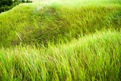 Chiuda su di erba spessa fresca con le gocce di acqua nel primo mattino Immagini Stock Libere da Diritti