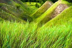 Chiuda su di erba spessa fresca con le gocce di acqua nel primo mattino Fotografia Stock