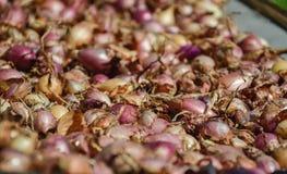 Chiuda su di essiccamento dell'allium cepa nazionale variopinto delle cipolle sul fondo netto dell'essiccatore Il mucchio di vari Immagini Stock