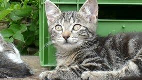 Chiuda su di giovane gatto stanco video d archivio