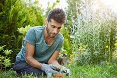 Chiuda su di giovane uomo barbuto serio in y-camicia blu ed il funzionamento concentrato guanti nel giardino, piantante germoglia Fotografie Stock