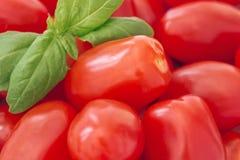 Chiuda su di interi pomodori di prugna del bambino e di un ramoscello di basilico Fotografia Stock Libera da Diritti