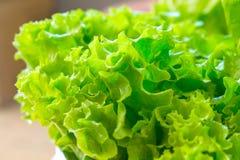 Chiuda su di lattuga verde fresca Immagini Stock