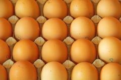 Chiuda su di molte uova in una fila, vista di prospettiva Fotografia Stock