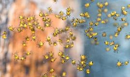 Chiuda su di molti piccoli ragni del bambino in ragnatela Fotografie Stock