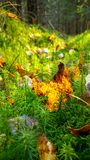 Chiuda su di muschio e cada foglie in foresta Fotografia Stock Libera da Diritti