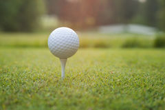 Chiuda su di palla da golf sul T al tramonto Immagine Stock