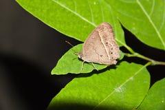 Chiuda su di piccola farfalla Immagine Stock Libera da Diritti