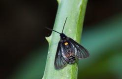 Chiuda su di piccola farfalla sull'aloe Vera Fotografie Stock