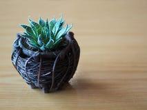 Chiuda su di piccola pianta del cactus verde nel canestro di legno Fotografie Stock Libere da Diritti