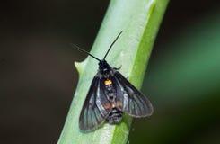 Chiuda su di piccola singola farfalla Immagini Stock Libere da Diritti
