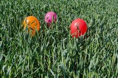 Chiuda su di piccoli palloni su alta erba Fotografie Stock Libere da Diritti