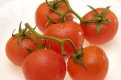 Chiuda in su di piccoli pomodori Fotografia Stock
