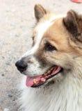 Chiuda su di sguardo del cane Immagini Stock Libere da Diritti