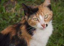 Chiuda su di singolo gatto di seduta sull'erba Fotografie Stock Libere da Diritti