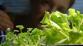 Chiuda su di un'acqua di spruzzatura del giardiniere sulle piantine all'interno Movimento lento archivi video