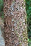 Chiuda su di un albero fotografie stock libere da diritti