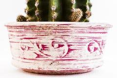 Barattolo decorato con il cactus Fotografia Stock