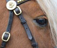 Chiuda su di un cavallino della castagna appena intorno all'area dell'occhio fotografia stock