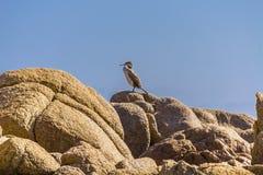 Chiuda su di un cormorano in Sardegna Italia immagine stock libera da diritti
