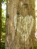 Chiuda su di un cuore bianco dipinto sulla corteccia di albero fuori in Fotografie Stock