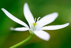 Chiuda in su di un fiore bianco Immagine Stock