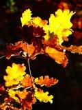 Chiuda su di un fogliame giallo e marrone nel automn Fotografie Stock Libere da Diritti
