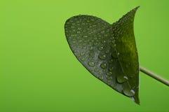 Chiuda in su di un foglio verde Immagine Stock Libera da Diritti
