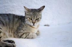 Chiuda in su di un gatto Fotografia Stock Libera da Diritti