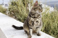 Chiuda in su di un gatto Fotografie Stock Libere da Diritti