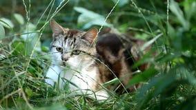 Chiuda in su di un gatto stock footage