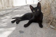Chiuda su di un gatto nero Fotografia Stock Libera da Diritti