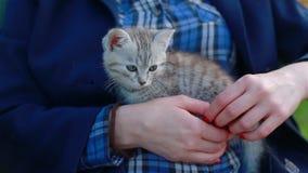 Chiuda su di un Kitty-gatto sveglio nelle mani della donna stock footage