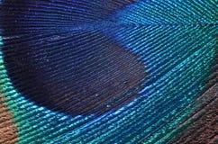 Particolare della piuma del pavone Fotografia Stock Libera da Diritti