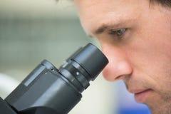Chiuda su di un ricercatore scientifico che per mezzo del microscopio Immagine Stock