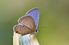 Chiuda in su di una farfalla Fotografie Stock