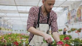 Chiuda su di una mano che tiene un imbuto Un uomo con una barba in un grembiule del giardino versa le piante ornamentali con acqu video d archivio